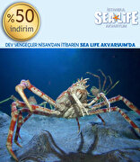 Picture of Istanbul SeaLife Aquarium %50 Discount Coupon